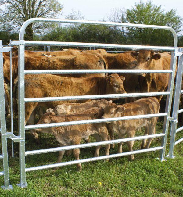 Barrière de contention bovine réhaussée