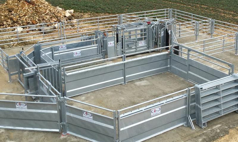 installation de contention pour bovins