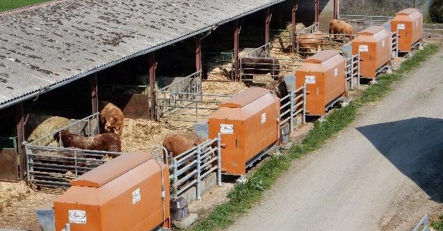 nourrisseurs pour bovins